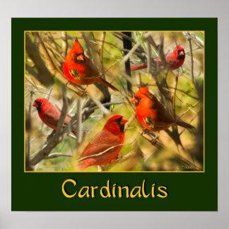 Cardinalis - POSTER - collage de cardenales Póster
