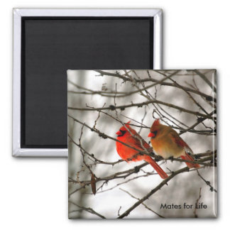Cardinals 2 Inch Square Magnet