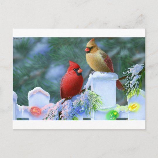 cardinals and christmas lights holiday postcard