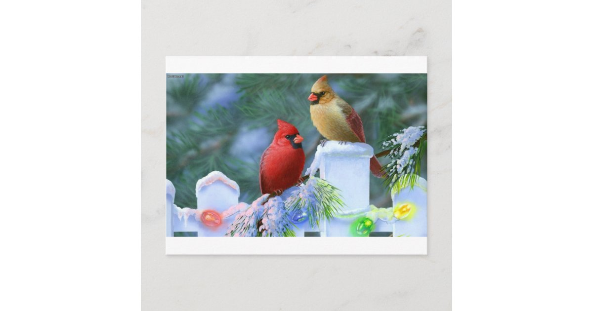 cardinals and christmas lights holiday postcard zazzlecom