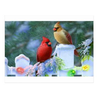 Cardinals and Christmas Lights Postcard