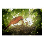 Cardinals Feeding Posters