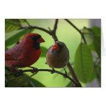 Cardinals Greeting Cards