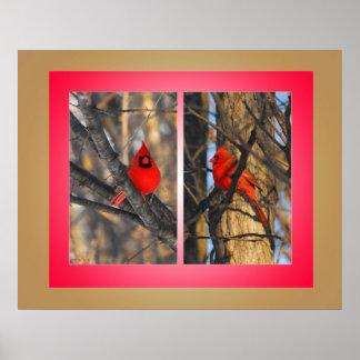"Cardinals in a ""Crisp"" Winter Morning Poster"