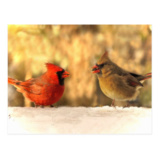 Cardinals in Autumn Postcard