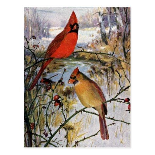 Cardinals in Winter Postcard