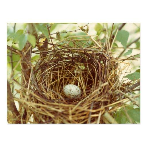 Cardinal's Nest Postcard