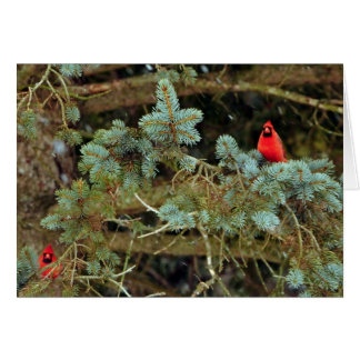 Cardinals Note Cards