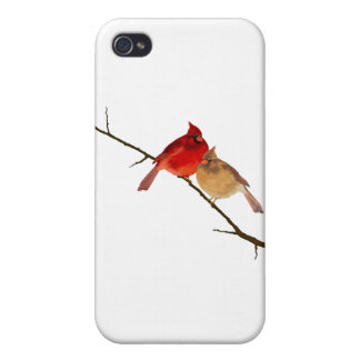 cardinals on a branch iPhone 4/4S case