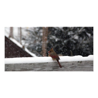 Cardinal's Snow Day Card