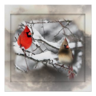 Cardinals Winter Scene Poster