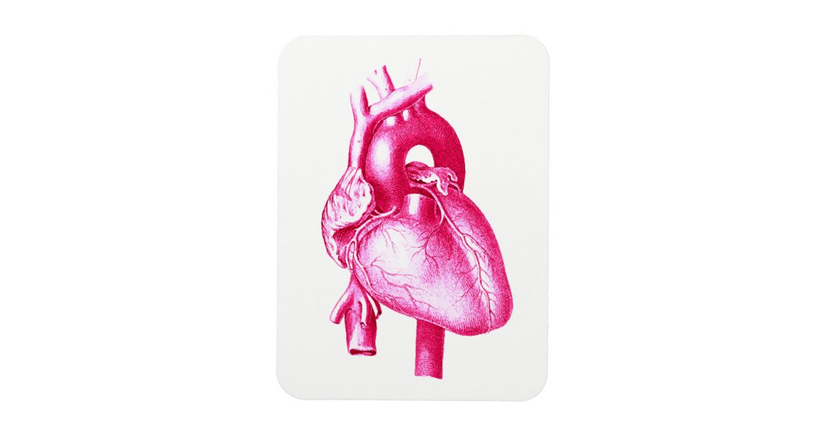 Cardiology Pop Art Pink Human Heart Anatomy Magnet Zazzle