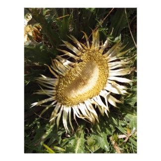 Cardo carlino (acanthifolia del Carlina) Membrete Personalizado
