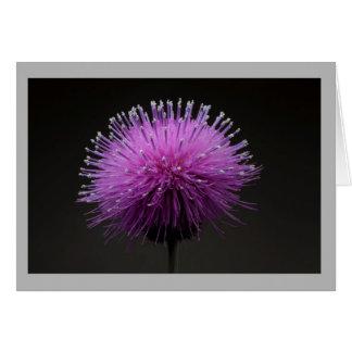 Cardo de Tejas de la púrpura de la flor 9 Tarjeta De Felicitación