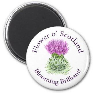 Cardo escocés brillante floreciente imán redondo 5 cm
