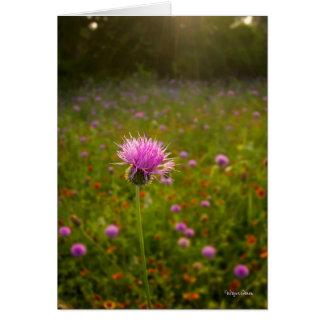 Cardo púrpura en la luz de la mañana - Tejas Tarjeta De Felicitación