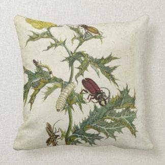 Cardos Spinosus: Escarabajos y orugas, placa 6 Cojín