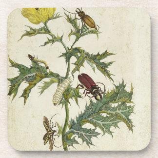 Cardos Spinosus: Escarabajos y orugas, placa 6 Posavaso