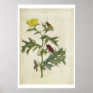 Cardos Spinosus: Escarabajos y orugas, placa 6 Póster