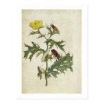Cardos Spinosus: Escarabajos y orugas, placa 6 Postal
