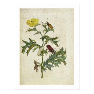 Cardos Spinosus: Escarabajos y orugas, placa 6 Tarjetas Postales
