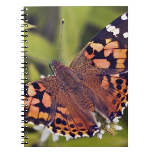 cardui del vanessa - Europa, Alemania, Baviera, Libro De Apuntes