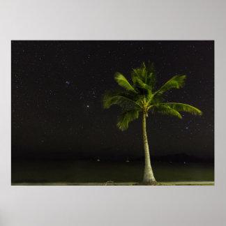 Cardwell Palm Print