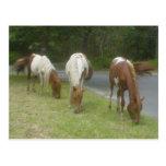 Carefree Ponies Post Card