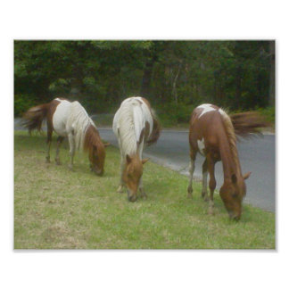 Carefree Ponies Poster