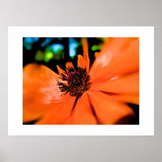 Carefree Spring Dayz - Large Format - Customized Poster