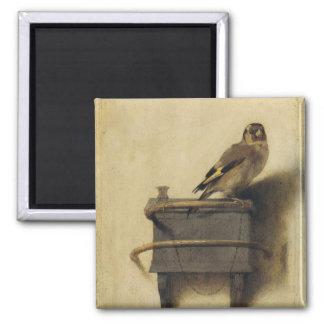 Carel Fabritius el Goldfinch Imán Cuadrado