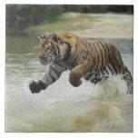 Carga del tigre de Bengala (Panthera el Tigris el  Azulejo Cuadrado Grande