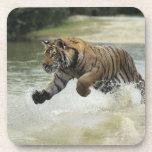 Carga del tigre de Bengala (Panthera el Tigris el Posavaso
