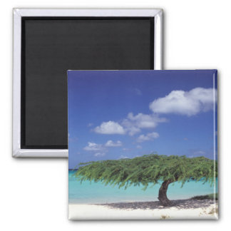 Caribbean, Aruba. Eagle Beach 2 Inch Square Magnet