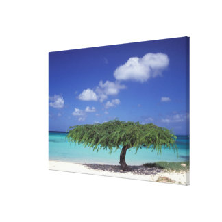Caribbean, Aruba. Eagle Beach Canvas Print