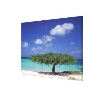 Caribbean, Aruba. Eagle Beach Gallery Wrapped Canvas