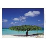 Caribbean, Aruba. Eagle Beach Card