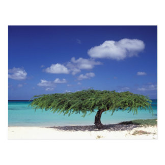 Caribbean, Aruba. Eagle Beach Post Card