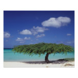 Caribbean, Aruba. Eagle Beach Poster