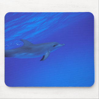 Caribbean, Bahamas Spotted dolphin Mouse Pad