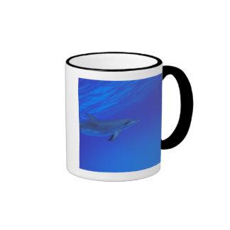 Caribbean, Bahamas Spotted dolphin Mug