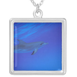 Caribbean, Bahamas Spotted dolphin Square Pendant Necklace