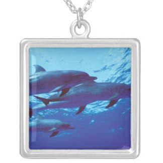 Caribbean, Bahamas Spotted dolphins Silver Plated Necklace