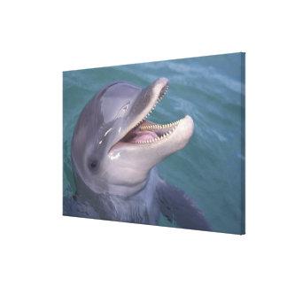 Caribbean, Bottlenose dolphin Tursiops 3 Canvas Print