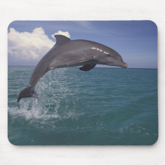Caribbean, Bottlenose dolphin Tursiops 3 Mouse Pad