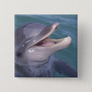 Caribbean, Bottlenose dolphin Tursiops 4 Button