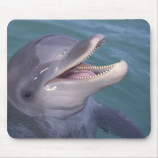 Caribbean, Bottlenose dolphin Tursiops 4 Mouse Pad