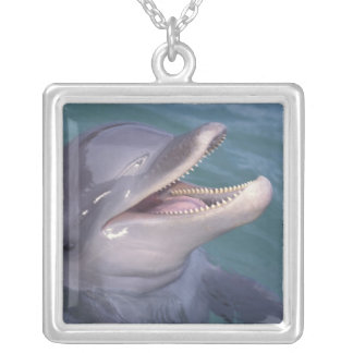 Caribbean, Bottlenose dolphin Tursiops 4 Jewelry