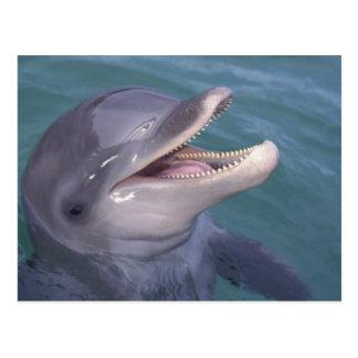 Caribbean, Bottlenose dolphin Tursiops 4 Postcards