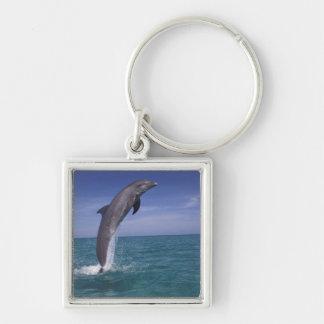 Caribbean, Bottlenose dolphin Tursiops Keychain